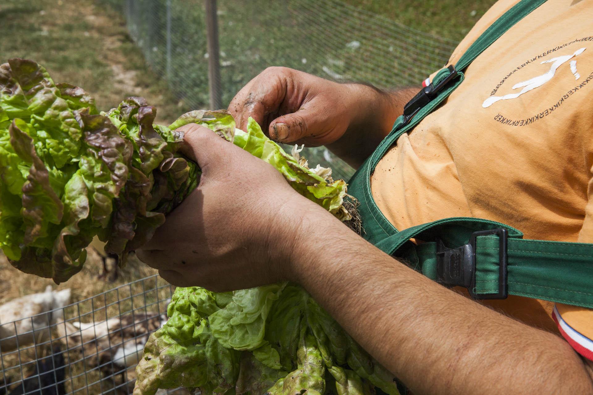 Ein Landwirt hat einen Salat in der Hand. Im Hintergrund sind Hühner zu sehen.