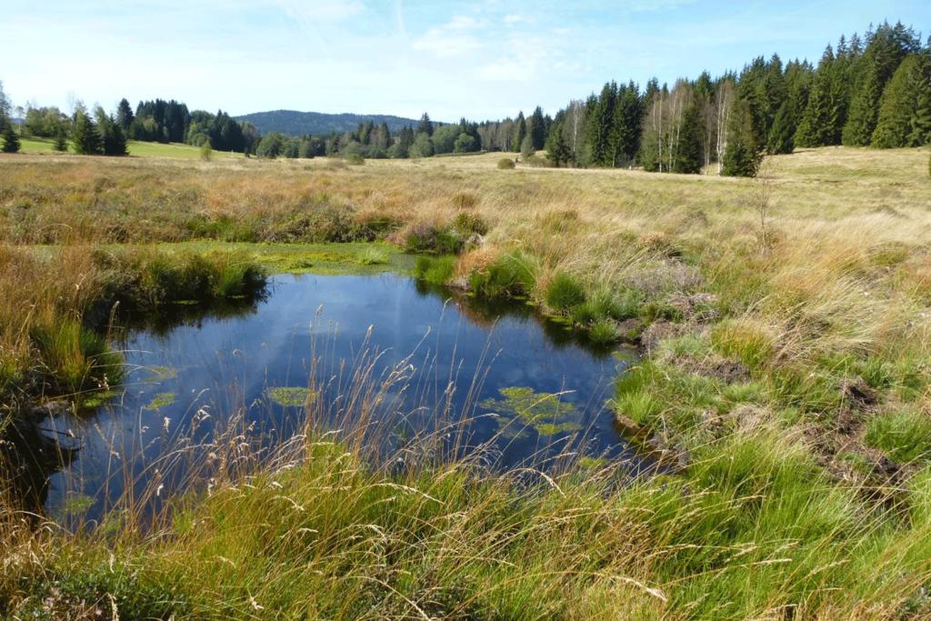 Hochmoor im Tal der Kalten Moldau. In der Mitte des Bildes ein Moortümpel.