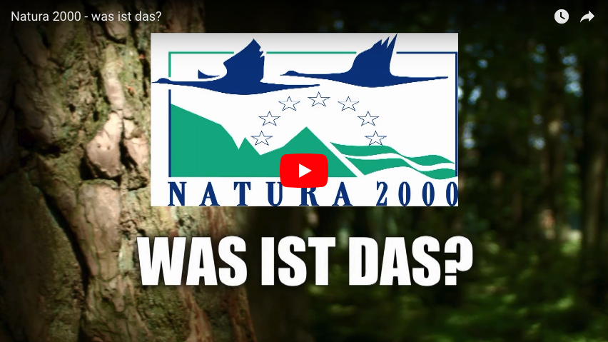 Picture of the Natura 2000 Logo in front of a forest backdrop linking to a YouTube video explaining Natura 2000 (DE).