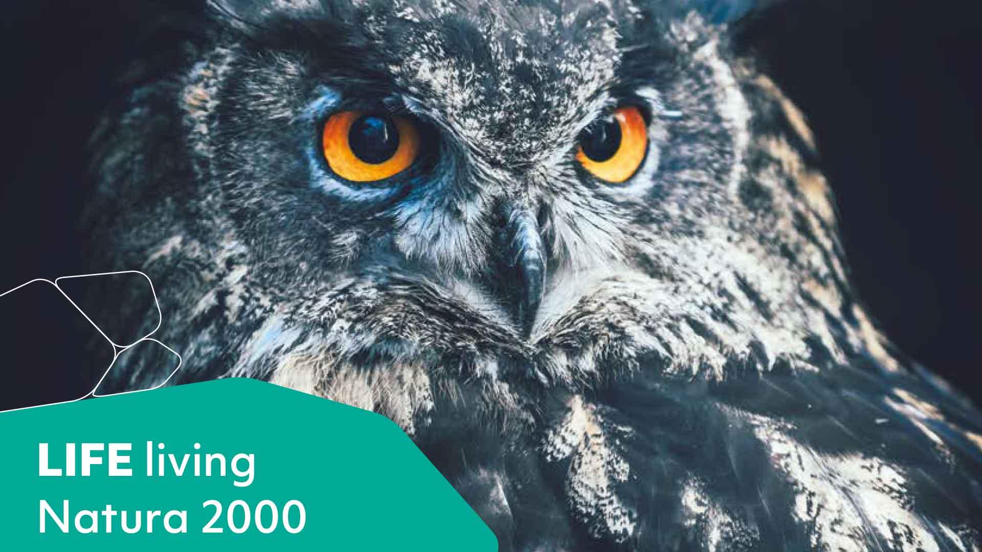 Eine Eule schaut in die Kamera. Auf der linken Seite ist eine grüne Kachel mit dem Satz: LIFE living Natura 2000.