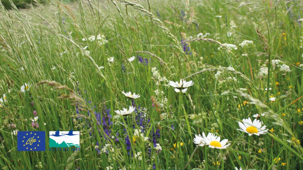 """LIFE-Grassland-Projekt"" in Luxemburg"