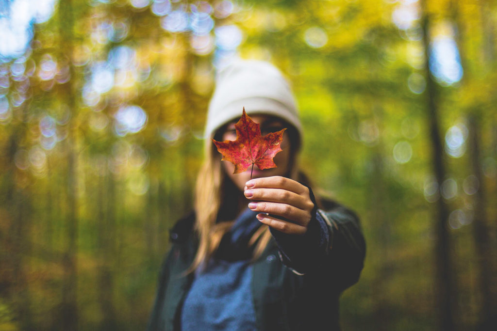 A girl holds a maple leaf covering her face.