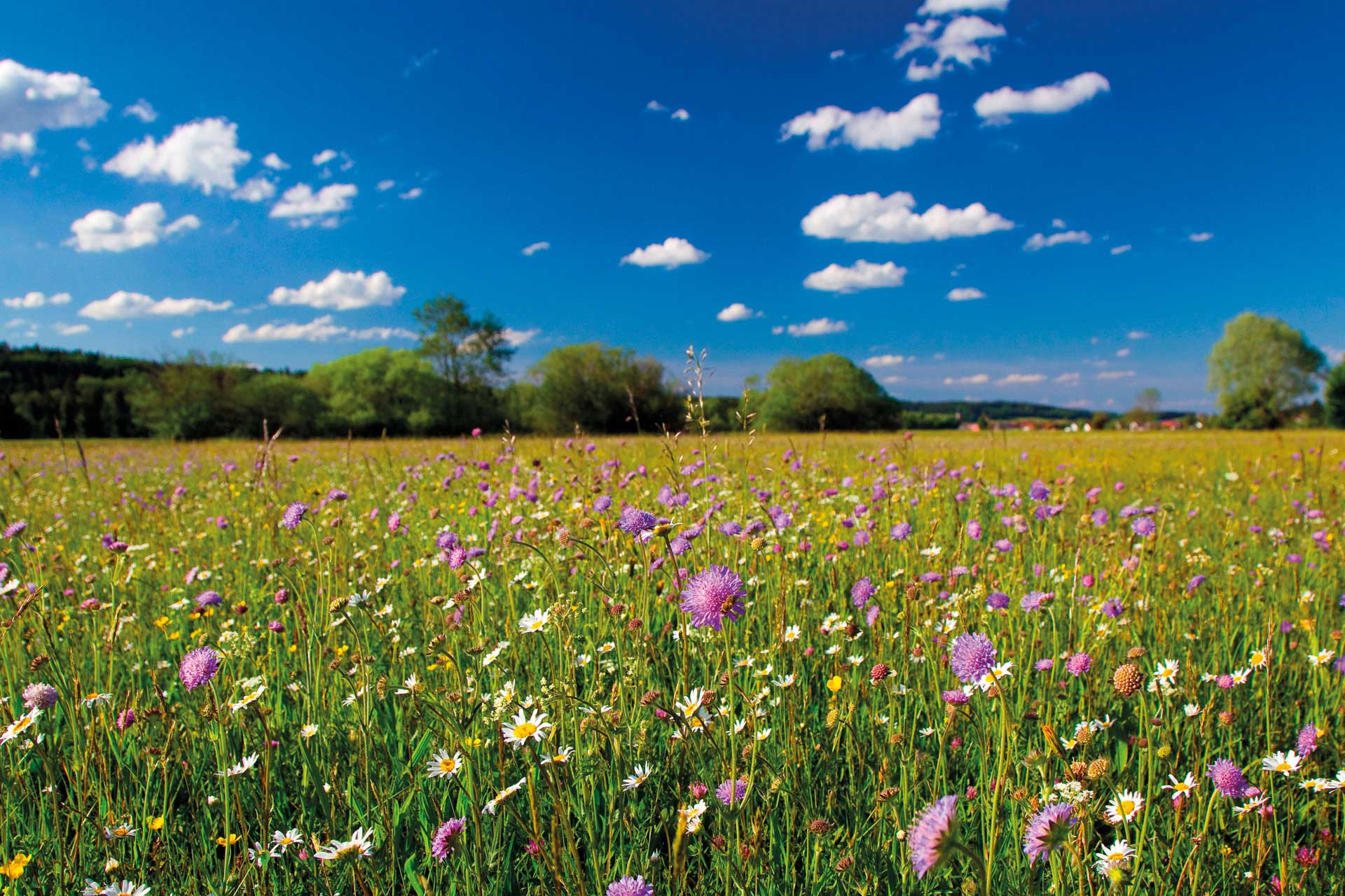 A colourful meadow beneath blue skies.