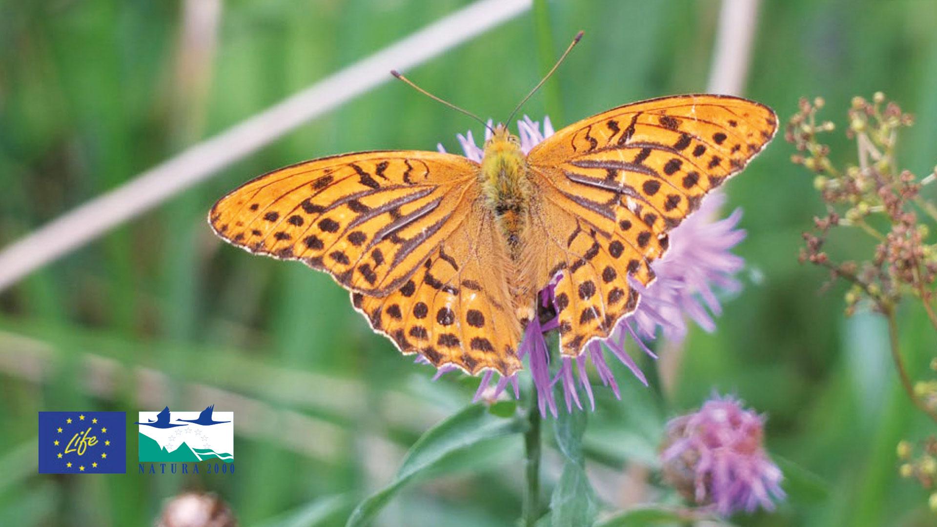 Ein Schmetterling sitzt auf einer Blume.