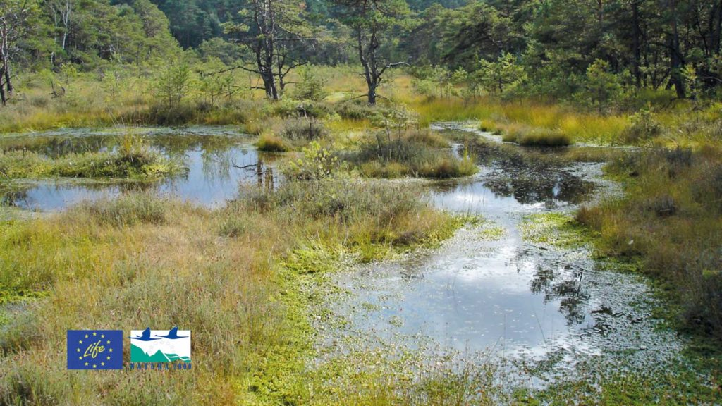 Ein Sumpfgebiet in Niedersachsen.