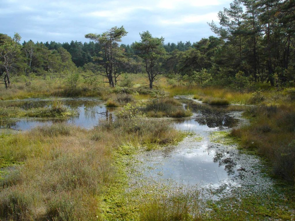 Otternhagener-Moor mit Wald und Himmel im Hintergrund.