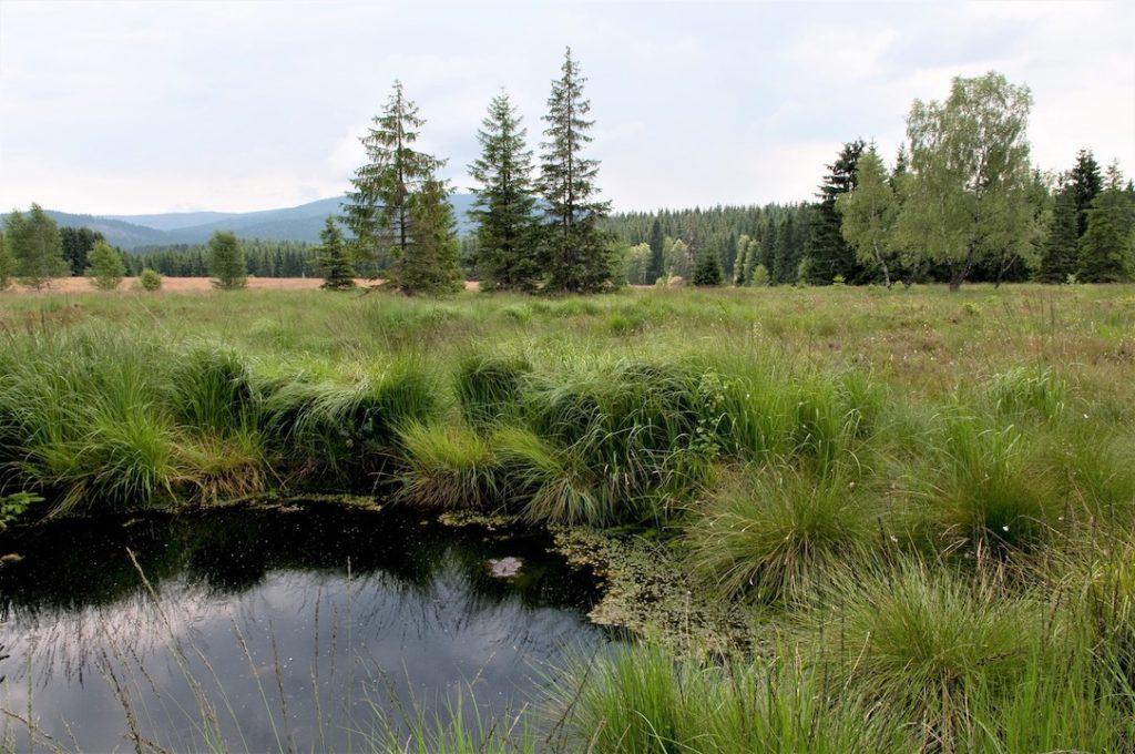 EineMoorfläche mit einzelnen Fichten und Birken sowie einer kleinen Wasserfläche in der vorderen linken Bildecke. Am Horizont erstrecken sich mit Fichten bewaldete Hügel.