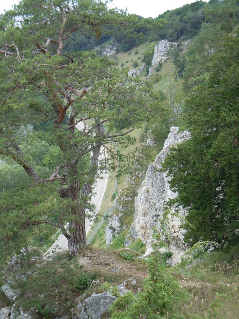 Weiße Felsen die steil zu einer Straße hin abfallen. Oberhalb der Felsen schließt sich Baumbewuchs an. Linjks vorne im Bild steht auf einem der Felsen eine Kiefer.