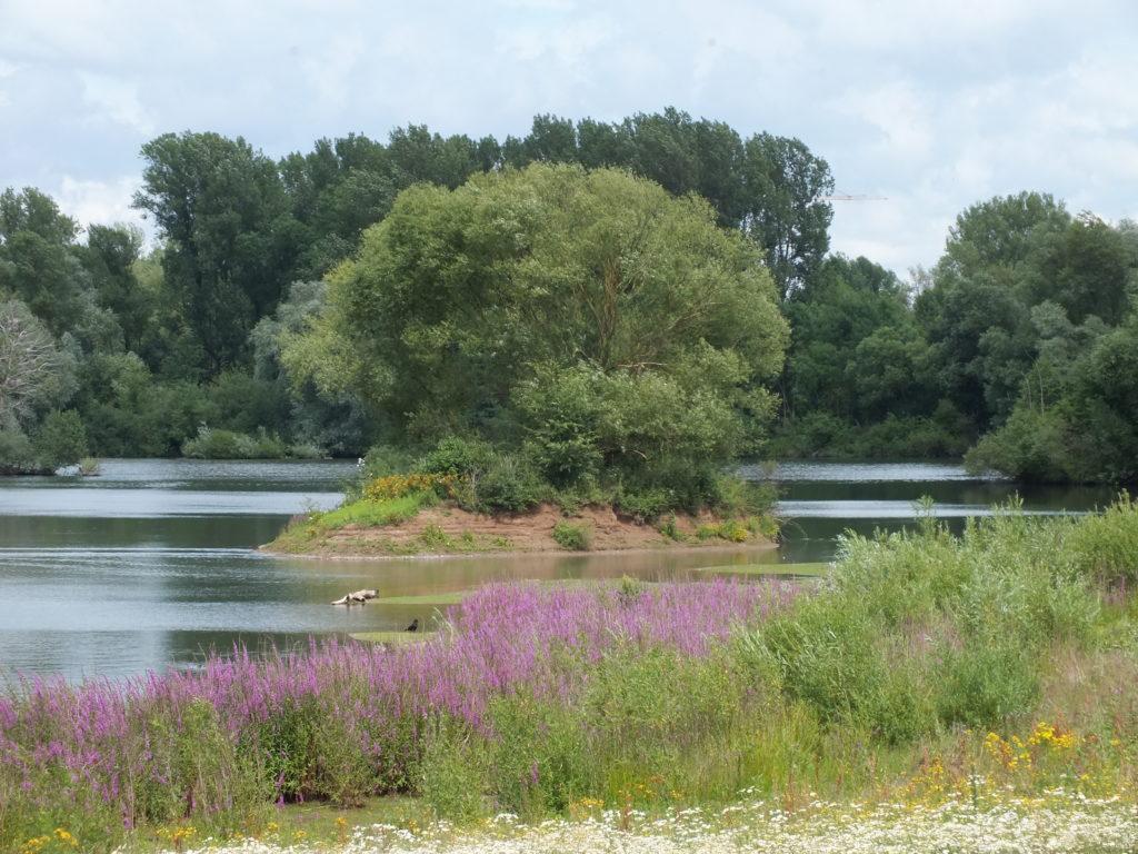 Eine Wasserfläche mit einer kleinen Insel. Der See wird im Hintergrund gesäumt von einem dichten Wald.
