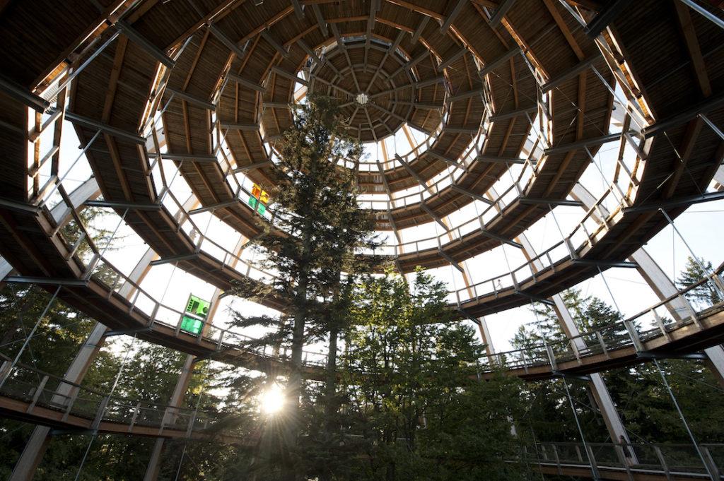 Der Baumwipfelpfad von unten. Es handelt sich um einen Holzsteg auf dem man in immer enger werdenden Kreisen schneckenhausartig bis zum höchsten Punkt nach oben laufen kann.