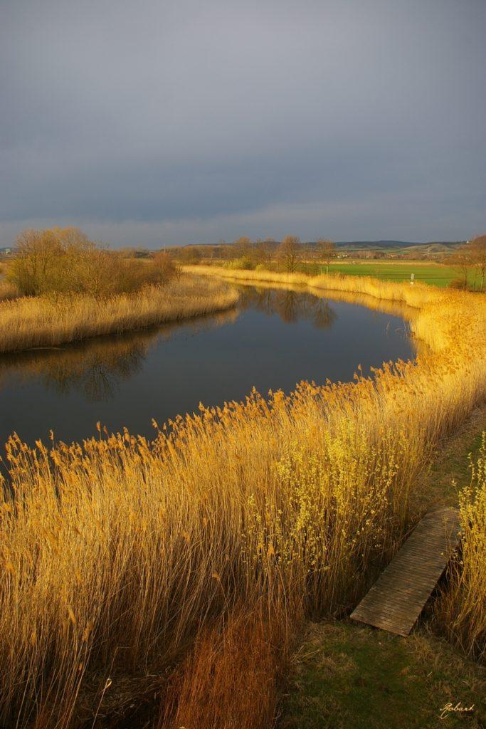 Gewässer, an den Seiten zugewachsen mit gleichartigen Pflanzen. Felder und bewölkter Himmel im Hintergrund.