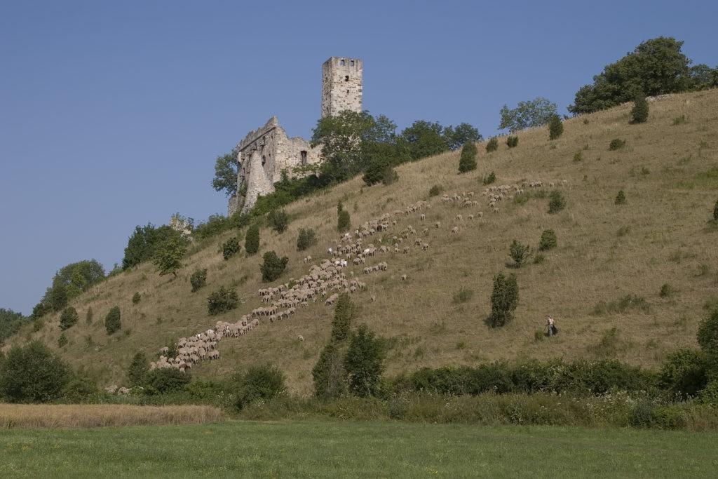 Ein Hang mit vielen Schafen und Büschen, der zu einer Ruine hinaufführt.