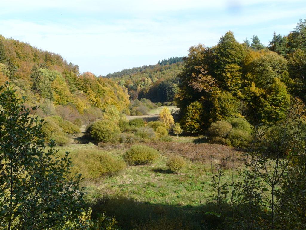 Bewachsene grüne Hügellandschaft.