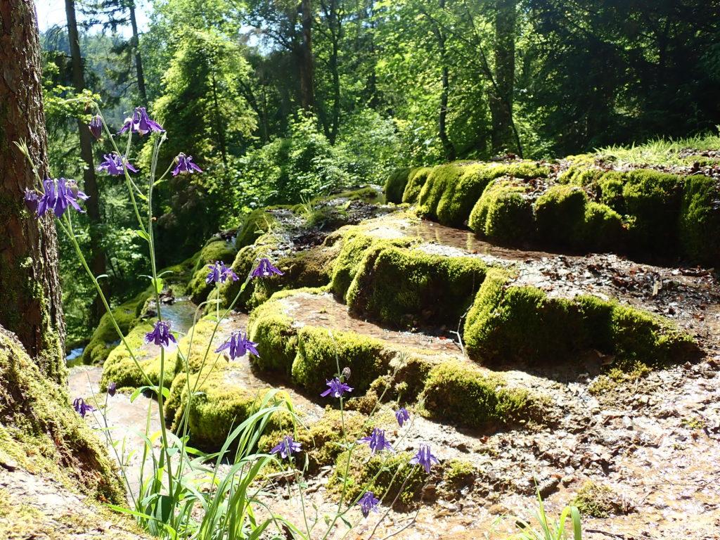 Terrassenartig abfallende Steine, die einen Brunnen bilden mit kleinen lila Blumen im Vordergrund und Wald im Hintergrund.
