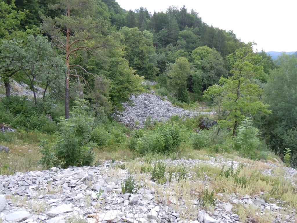 Auf dem Bild ist im Vordergrund Kalkschutt, das heisst grössere Kalkbruchsteine, zu sehen. Die Fläche wird von einigen Pflanzen besiedelt. Im Hintergrund schließt sich ein bewaldeter Hang an.