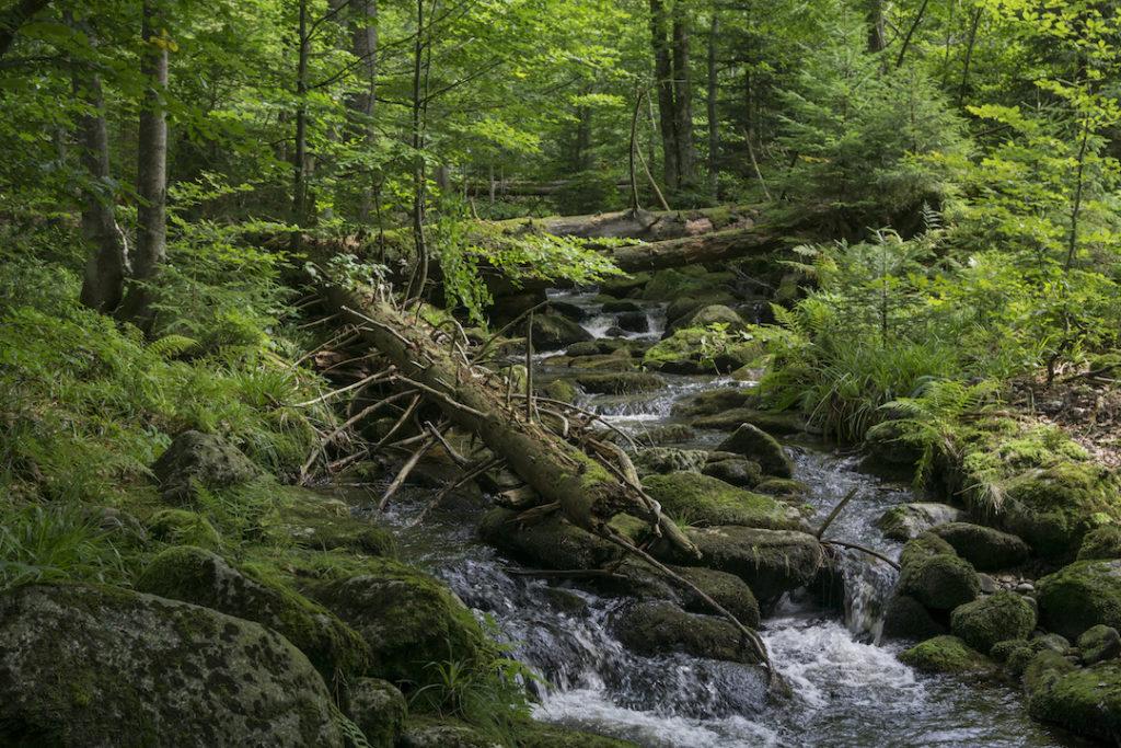 Ein Bach, der wild über moosbewachsene Steine durch einen grünen Buchenwald fließt. Über dem Bach liegen alte Baumstämme.