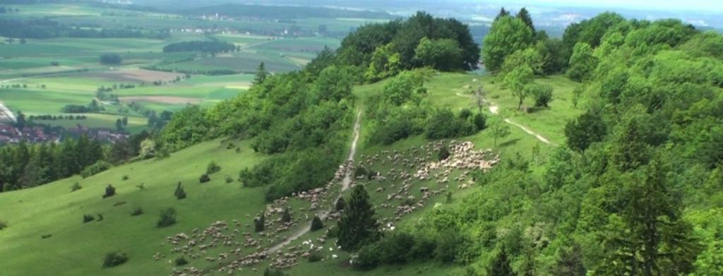 An einem grünen Berghang ist eine große Schafherde zu sehen, die die Fläche beweidet.