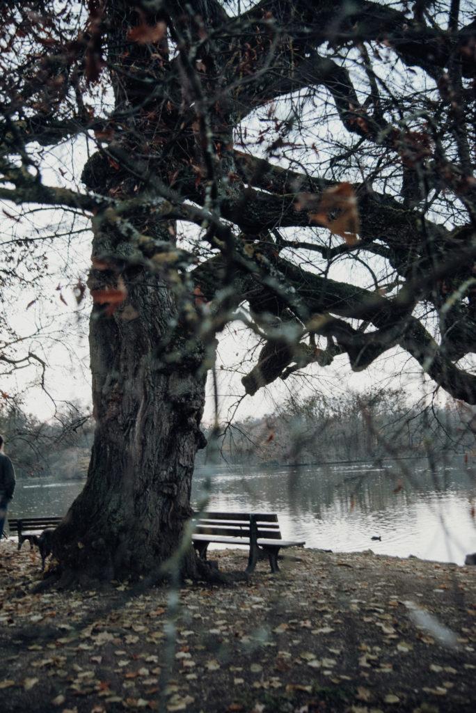 Eine alte knorrige Linde an einer Wasserfläche. Vor der Linde stehen zwei Parkbänke mit Blick auf das Wasser.