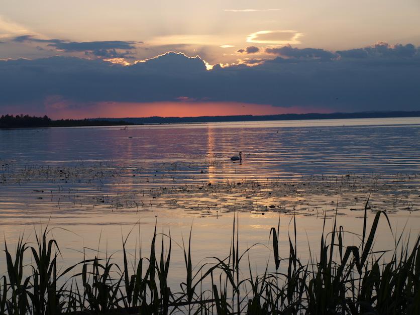 Die Wasserfläche des Chiemsees im Abendlicht. Ein Schwan schwimmt in der Mitte des Bildes über den See. Im Hintergrund scheint die Abendsonne rötlich durch Wolkenberge.