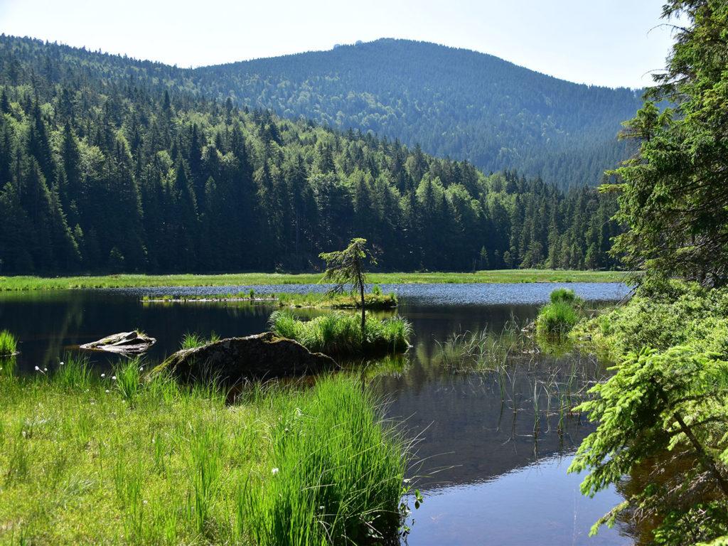 Ein großes Waldgebiet um einen See herum gelegen das sich bis zu einem Höhenzug fortsetzt.