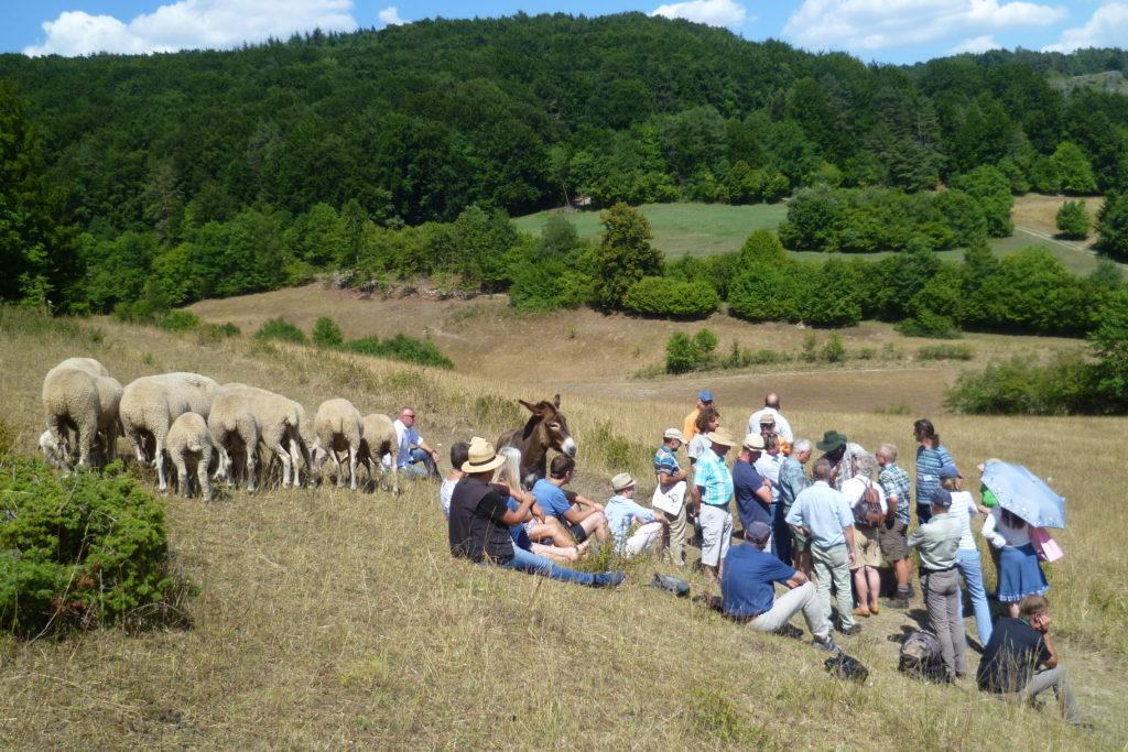 Besuchergruppe mit Schäfer, Schafen und Esel auf einem Trockenhang der Nördlichen Frankenalb. Foto: E. Köstler / ANL