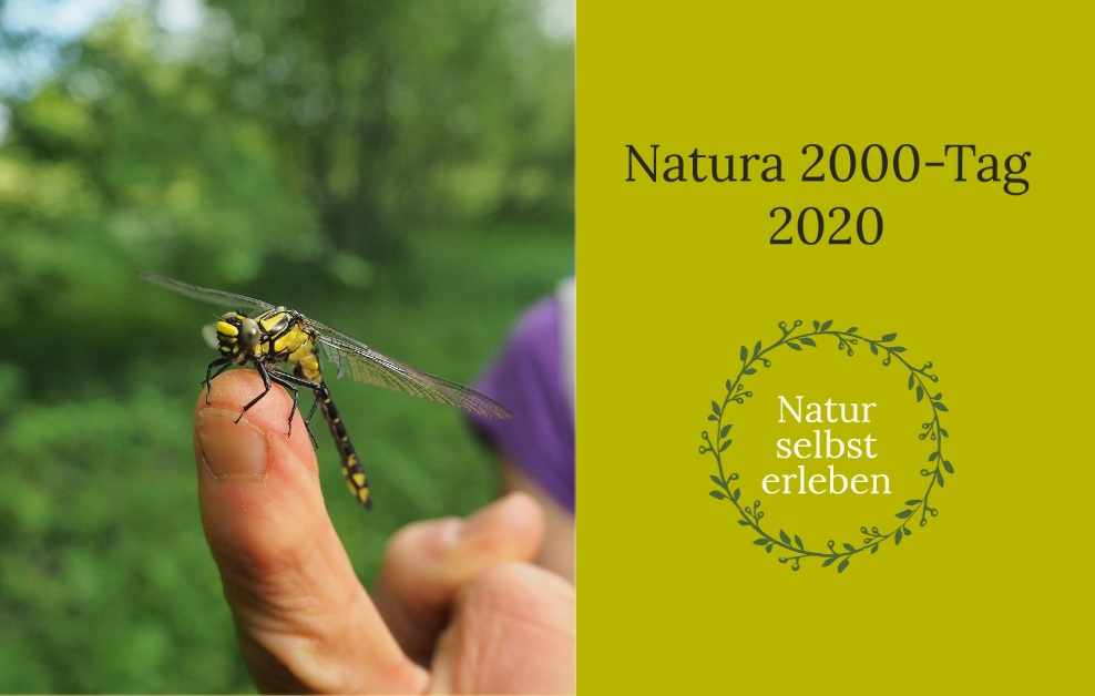 Bild einer Libelle mit der Beschriftung Natura 2000-Tag 2020