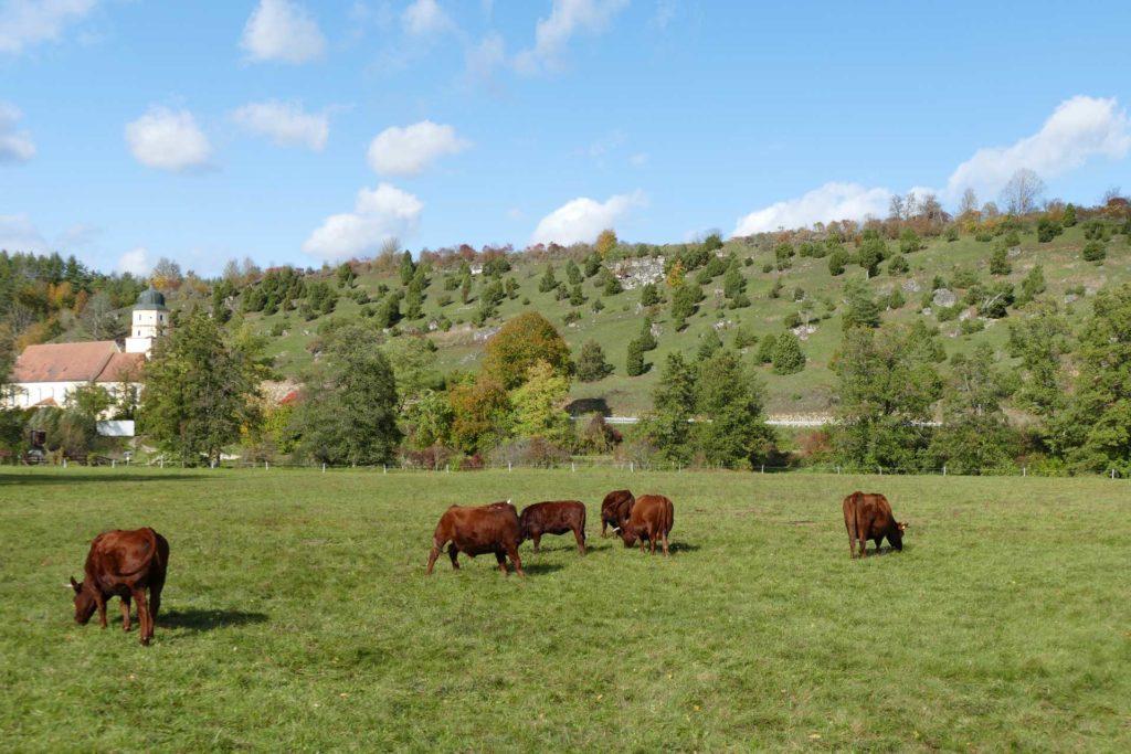 Grünes Tal mit sechs Kühen auf einer Weide