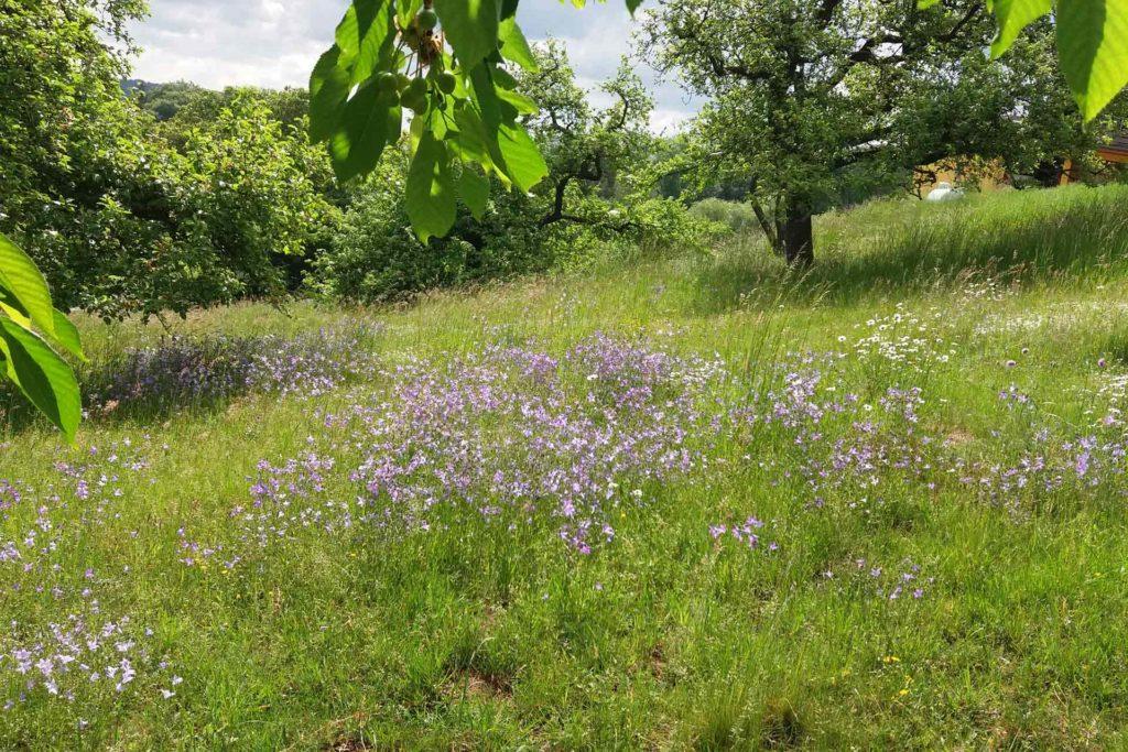 Grüne Wiese mit violetten Blumen und Bäumen
