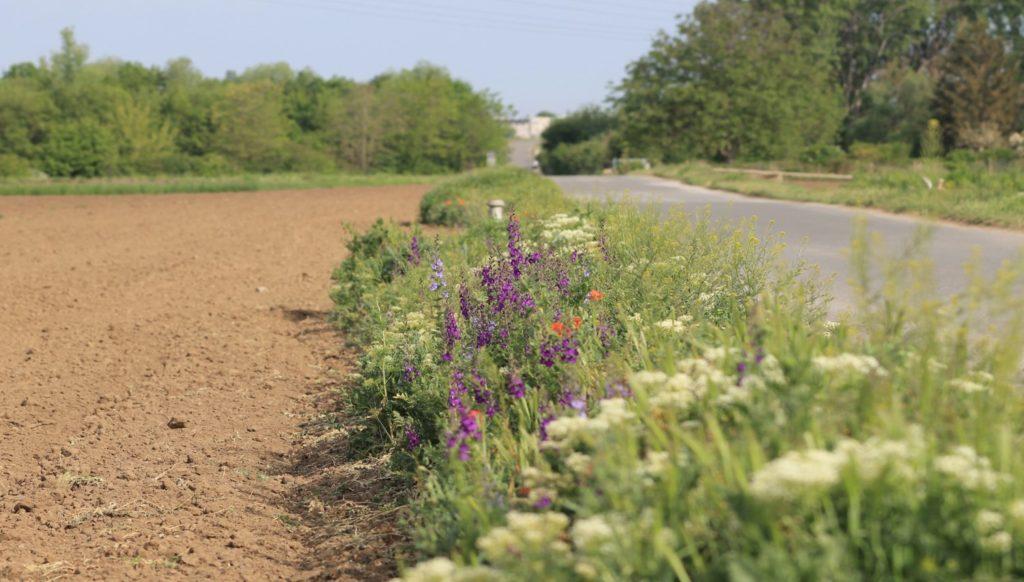 Blühender Randstreifen zwischen Feld und Straße