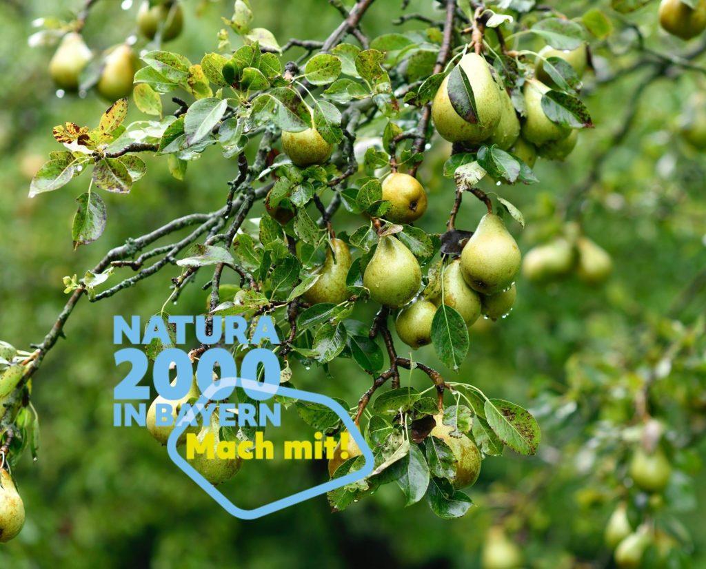 Birnen an einem Ast, im Vordergrund der Schriftzug: Natura 2000 in Bayern - Mach mit!