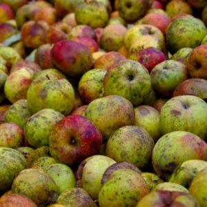 Äpfel auf einem Haufen