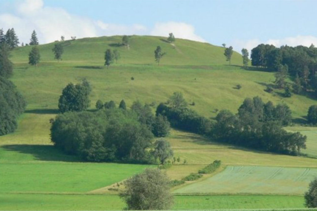 Grüne Wiesen mit Baumgruppen vor einem langsam ansteigenden grünen Hügel.