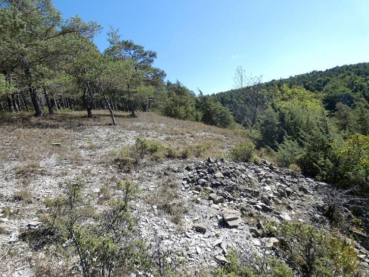 Ein steiler steiniger Hang mit einigen Bäumen und Sträuchern.