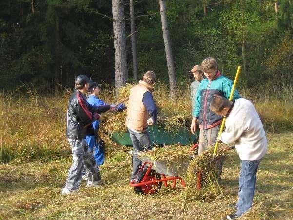Sechs Jugendliche sammeln auf einer Wiese Mahdgut ein und legen es in Schubkarren.