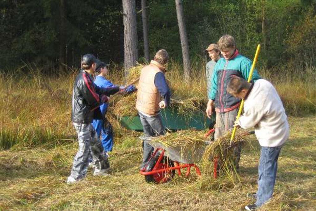 Kinder beladen zusammen eine Schubkarre mit gemähten Gras.