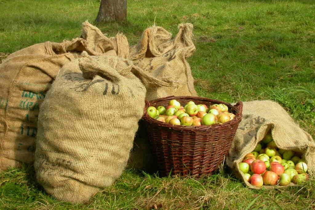 Apfelsäcke und Korb auf einer Wiese