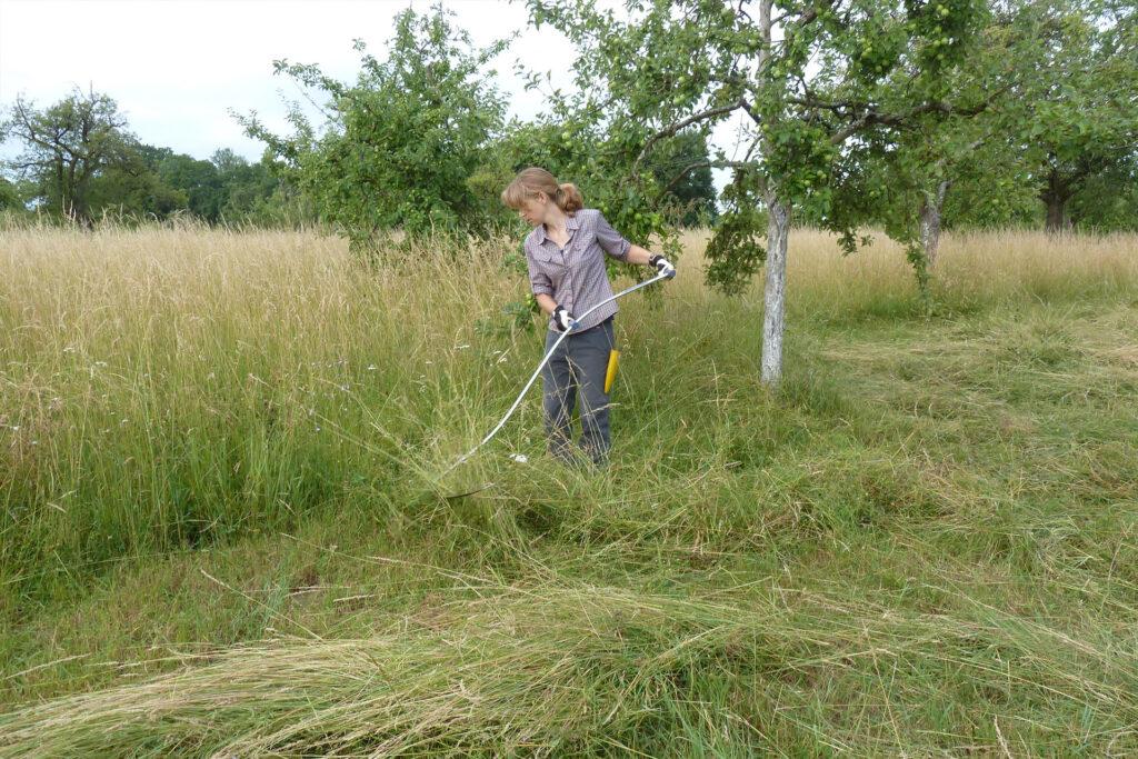 Eine Frau mäht mit einer Sense hohes Gras auf einer Wiese mit Apfelbäumen