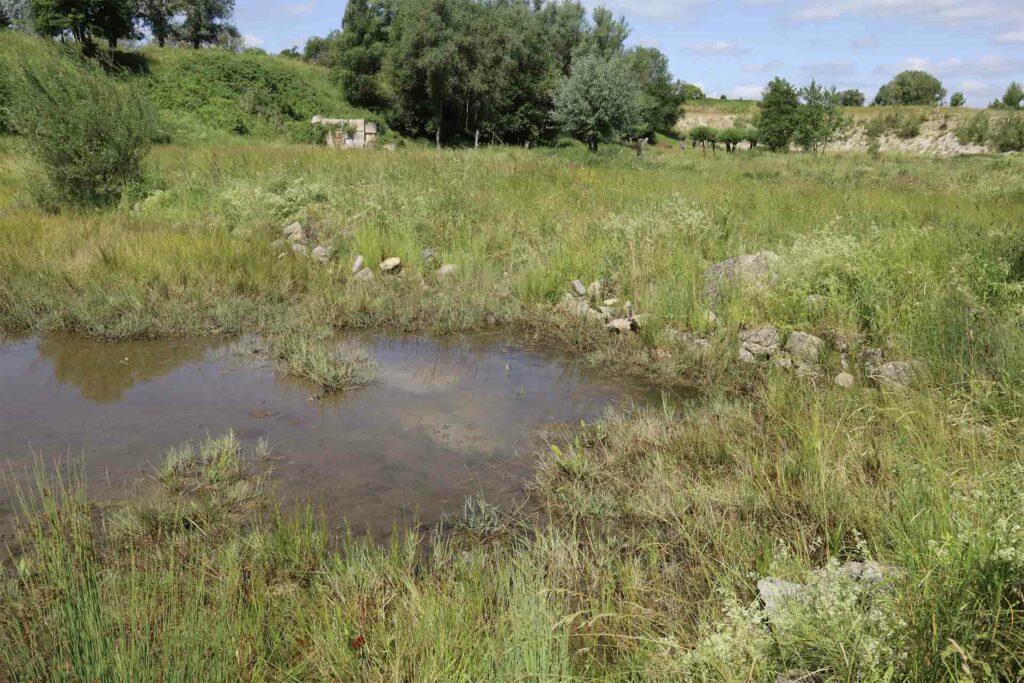 Ein kleiner Teich in der Kiesgrube Mühldorf wird umzäunt von zahlreichen Pflanzen.
