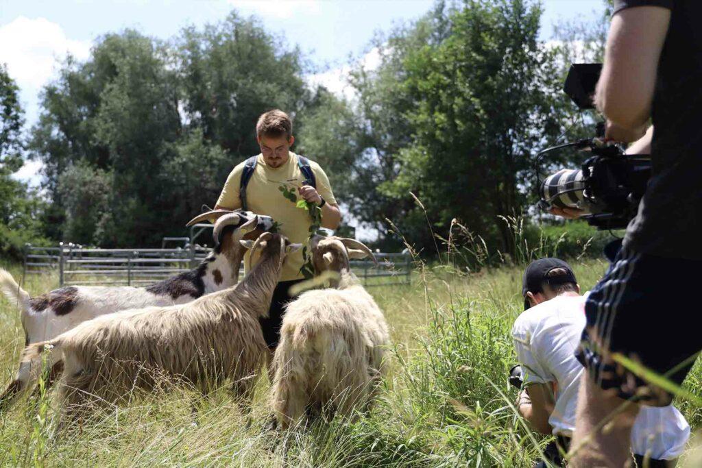 Die Tauernscheckenziegen der Mühldorfer Kiesgrube werden von einem Bund Naturschutz-Mitarbeiter gefüttert.